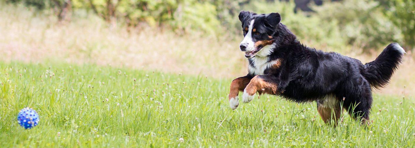 Therapieablauf - Physiotherapie für Hunde