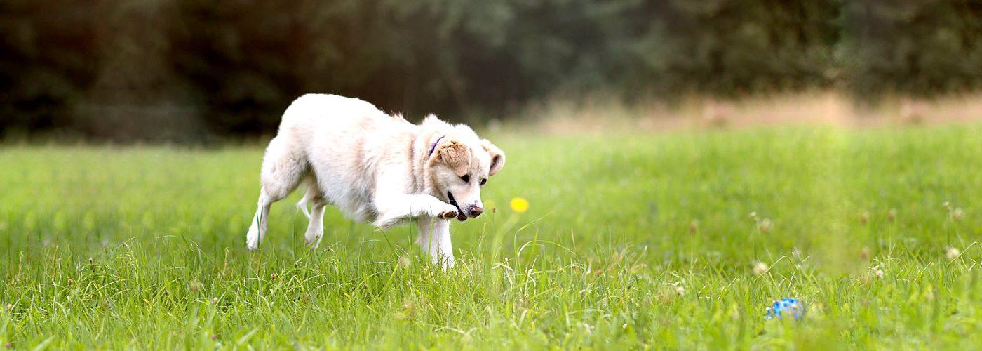 Hundephysiotherapie Pfoten-fit - Ballspielen